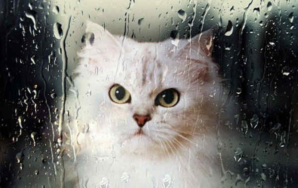 Погода на 23 травня: не потеплішає, буде хмарно і з дощами