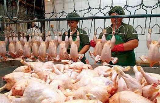 Українську курятину із січня перевірятимуть на антибіотики