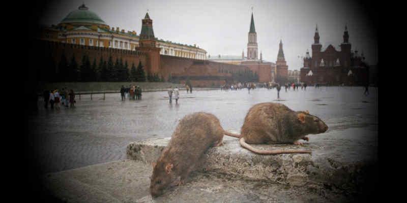 Снова Украина виновата