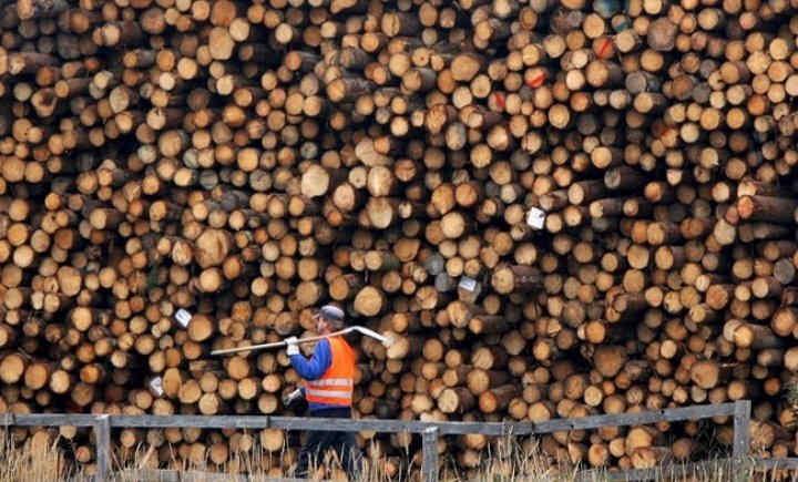 Україна і ЄС створили арбітражну комісію щодо заборони експорту лісу-кругляка