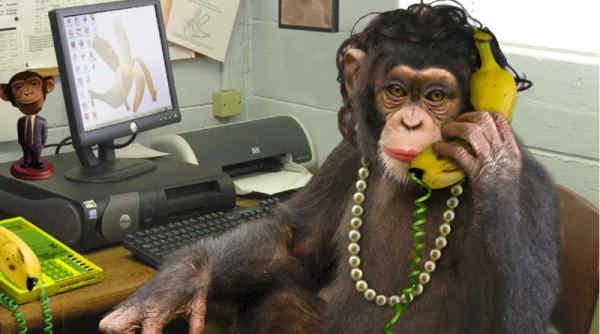 Мавпа за пультом управління