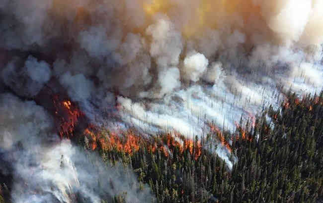Згоріти дотла!: На Московії збільшилася площа лісових пожеж