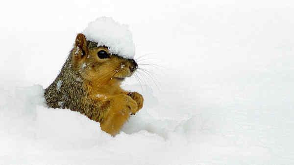 Погода на 31 березня: морозна ніч, сніг та поривчастий вітер