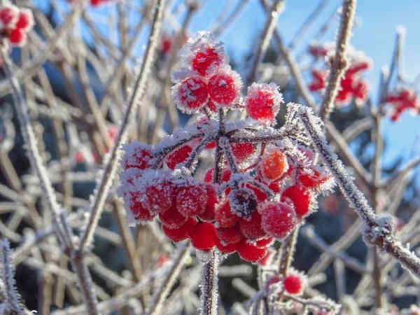 В Україну йде похолодання: грози, рясні дощі та заморозки